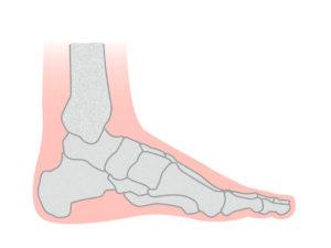 足骨の横図
