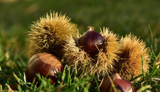 秋の味覚!意外にも栄養もバランスよく豊富に含まれている「栗」の豆知識