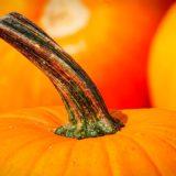 かぼちゃの豆知識